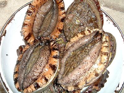 夏の貝といえばアワビ